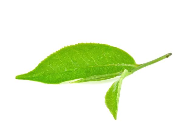 Foglie di tè verde bagnate isolate su priorità bassa bianca.
