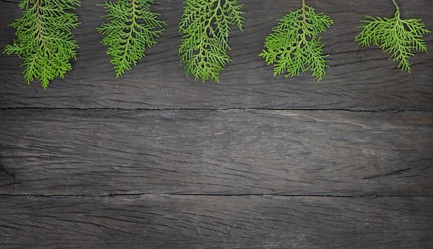 Rami di thuja verde su uno sfondo di legno scuro.