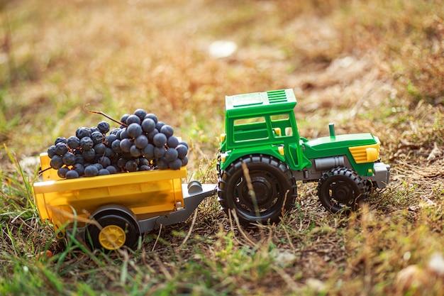 Il trattore giocattolo verde con rimorchio trasporta uve nere mature. concetto di raccolta