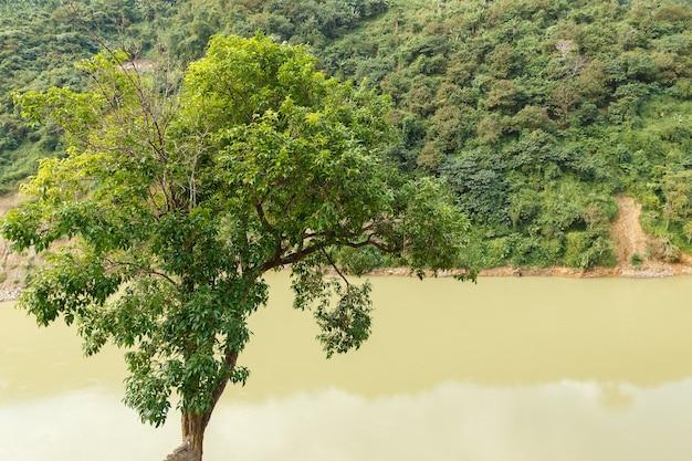 Albero verde dal fiume nam na river lai chau provincia vietnam