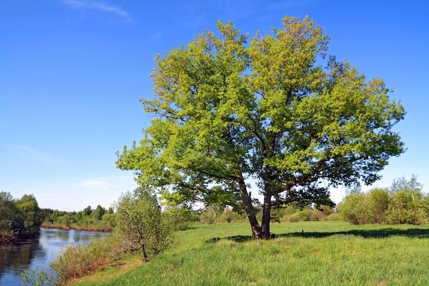 Albero verde sul fiume costa