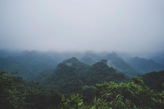 Albero verde nella vista della foresta sulla giungla superiore tropicale con nebbia nebbiosa dopo la pioggia. vista dal picco nel parco nazionale di cat ba. ha long, vietnam.