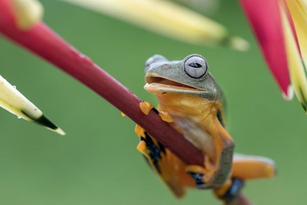 La rana di albero verde si è appollaiata sui petali di un fiore Foto Premium
