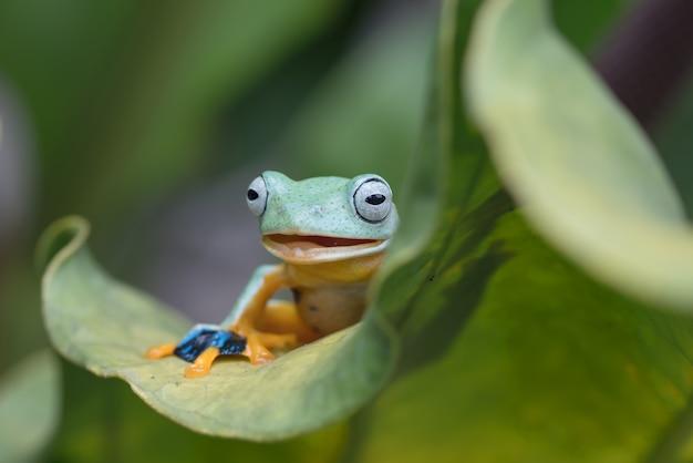 Rana di albero verde arroccato su una foglia Foto Premium