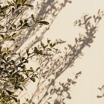 Foglie di piante di alberi verdi e ombre di luce solare sulla parete beige neutra