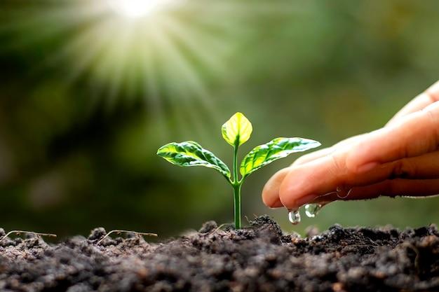 Alberi verdi che crescono sul terreno e mani dell'agricoltura che innaffiano gli alberi, concetto di coltivazione di alberi e conservazione della natura sostenibile.