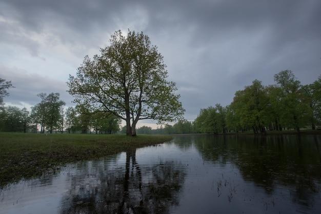 Alberi e fiume verdi