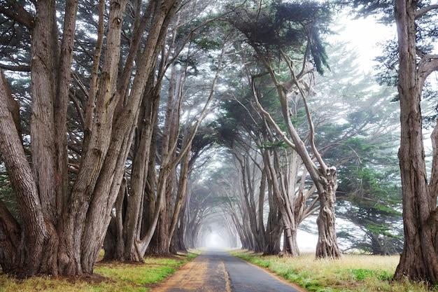 Tunnel di alberi verdi.