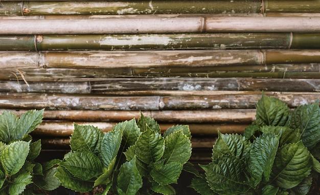 Foglie verdi tropicali contro il recinto di bambù della plancia.