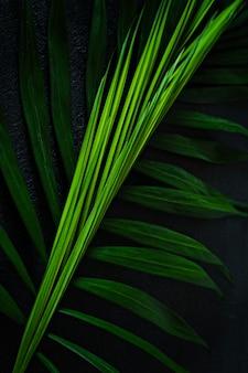 Foglie di palma tropicali verdi su un fondo scuro. foresta tropicale naturale, modello verde.
