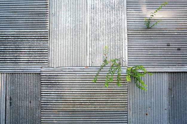 Erba verde sul vecchio muro zincato arrugginito, vecchia casa abbandonata, dai toni di colore.