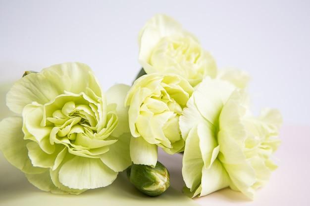 I garofani gialli verdi fioriscono su un fondo lilla bianco. posto per il testo. festa della mamma. biglietto d'auguri. giorno del matrimonio. san valentino.