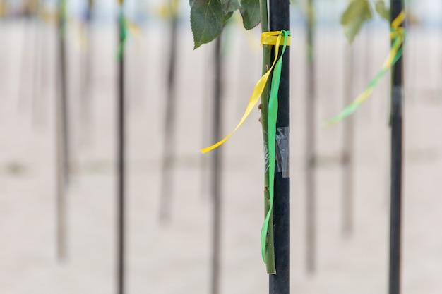 Nastro verde e giallo nel colore della bandiera brasiliana Foto Premium