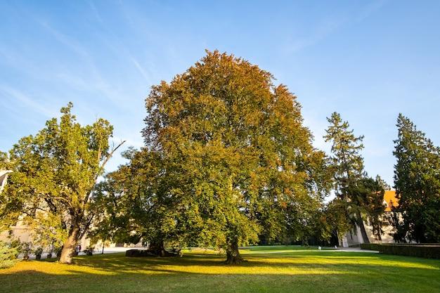 Alberi verdi e gialli nel parco di inizio autunno.