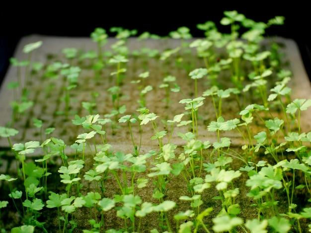 Giovani piante verdi agricoltura biologica