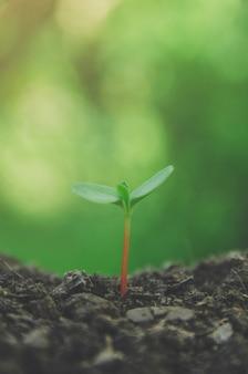 Le piante giovani e le piantine crescono nel terreno con la luce del mattino.