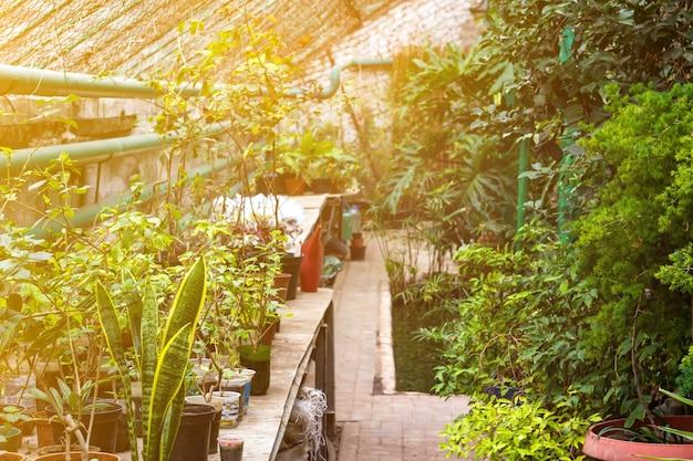 Interno soleggiato della serra della serra pieno di piante verdi fresche. design moderno dell'architettura d'interni. piante decorative da interno naturali. rigoglioso giardino botanico. bellissimo sfondo primaverile.
