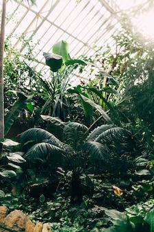 Serra con piante tropicali. albero di banane, monstera, palme. luce del sole. foto di alta qualità