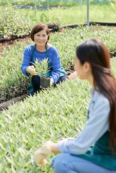 Lavoratori della serra che piantano i fiori