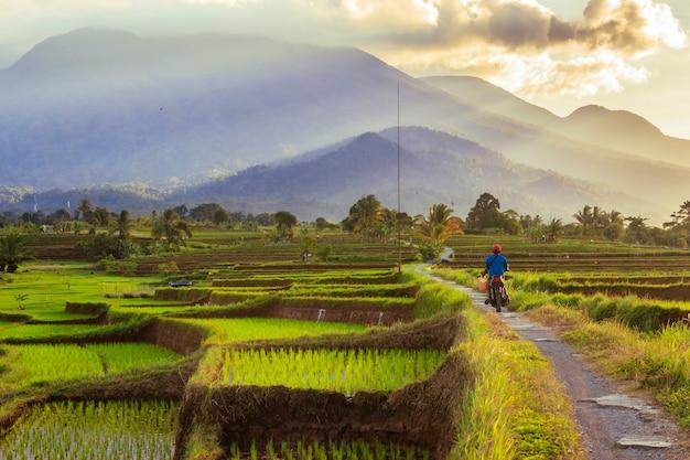 Saluta la mattina con entusiasmo sulla strada per le risaie sotto il sole splendente