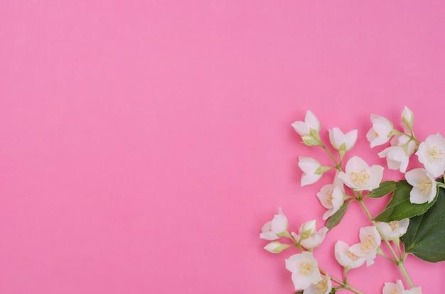 Biglietto di auguri sfondo, delicati fiori di gelsomino su uno sfondo rosa con spazio di copia con messa a fuoco selettiva