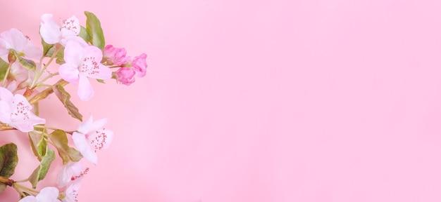Banner di biglietto di auguri con fiori di mela su sfondo rosa con spazio di copia