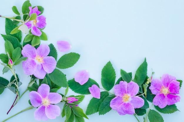Biglietto di auguri, fiori di rosa canina delicati su sfondo blu con spazio di copia con messa a fuoco selettiva
