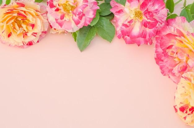 Biglietto di auguri, rose delicate sul rosa
