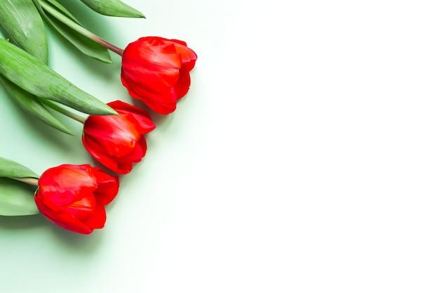 Biglietto di auguri con tulipani rossi su sfondo verde chiaro, posto per il testo.