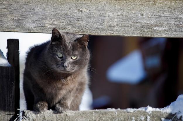 Il gatto grigio si siede sul recinto. animali senza casa. foto di alta qualità