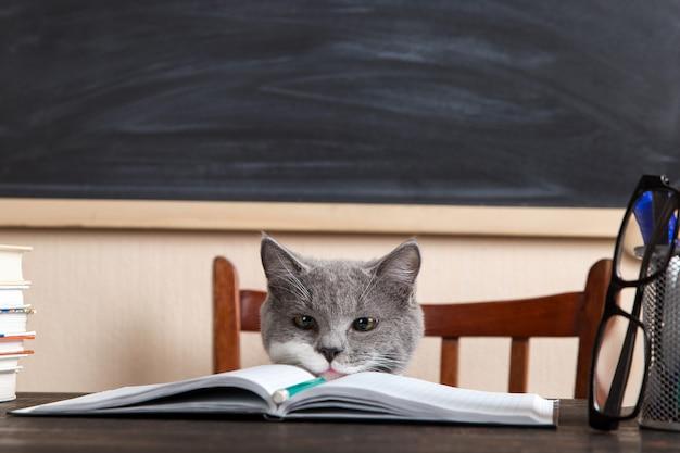 Il gatto grigio si siede a un tavolo con libri e quaderni, studiando a casa.