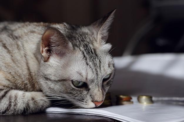 Un gatto grigio che guarda pila di monete. immagine di concetto che suggerisce di guardare o risparmiare denaro. un gatto ricco.