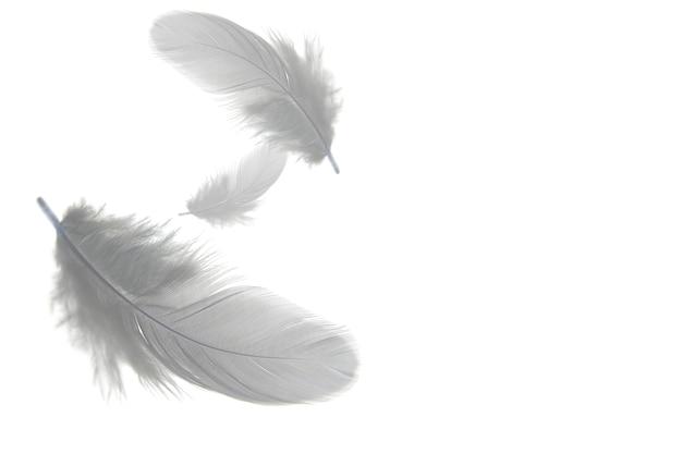 Piume grigie galleggiano nell'aria, isolato su sfondo bianco.