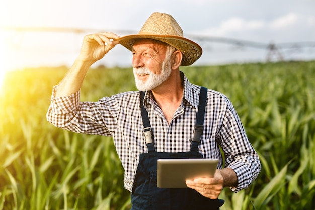 Agronomo anziano con barba dai capelli grigi che ispeziona il campo di mais e utilizza un computer tablet.
