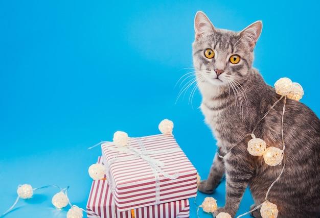 Gatto soriano grigio seduto da scatole regalo