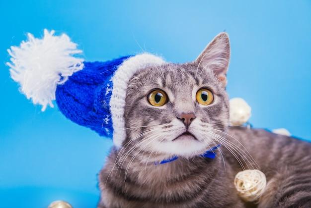 Il gatto soriano grigio indossa un cappello di natale