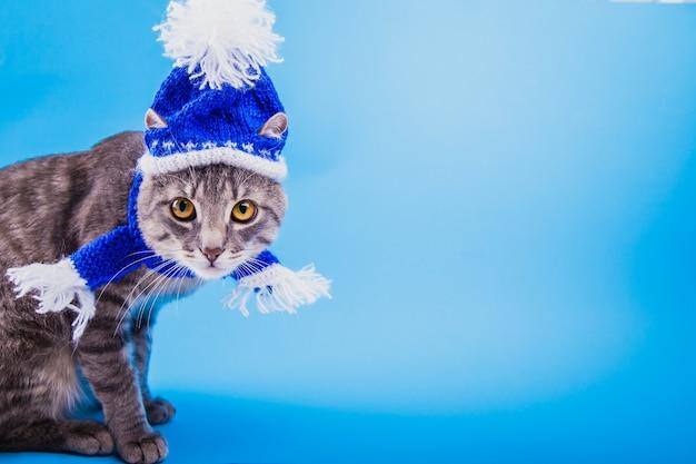 Il gatto soriano grigio indossa un cappello e una sciarpa