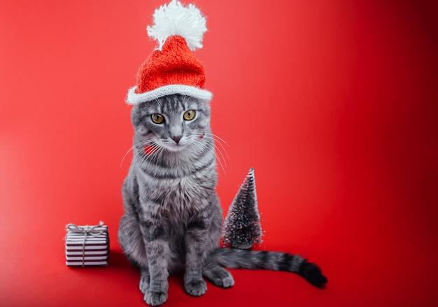 Gatto soriano grigio indossa il cappello di babbo natale su sfondo rosso con scatola regalo e albero di natale. concetto di natale e capodanno. spazio