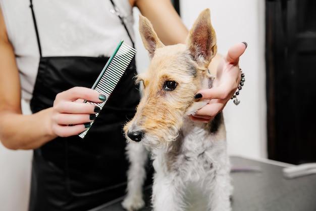 Groomer prendersi cura dei peli del cane