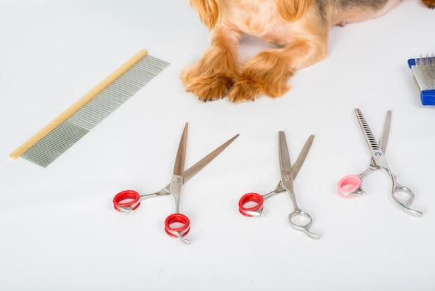 Strumenti per la toelettatura dei cani