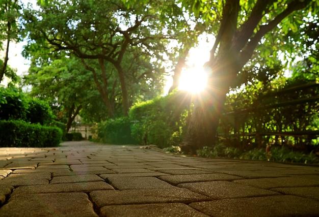Angolo al suolo del percorso del giardino con il sole splendente che splende attraverso i grandi alberi