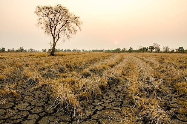Siccità al suolo, campi e siccità al suolo sullo sfondo dell'alba