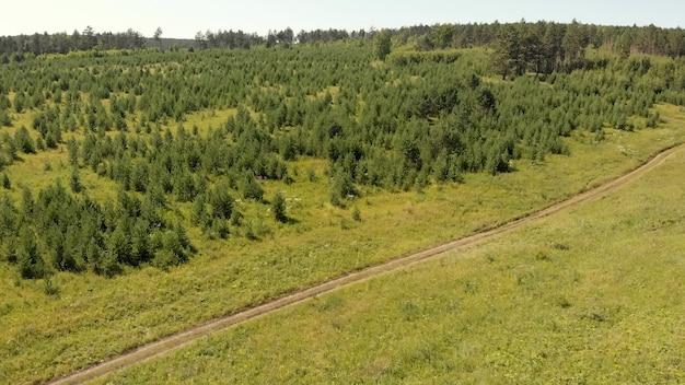 Strada a terra tra pini e prati