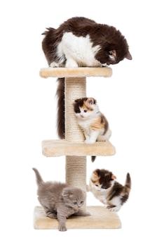 Gruppo di gatti che giocano su un albero di gatto isolato su bianco