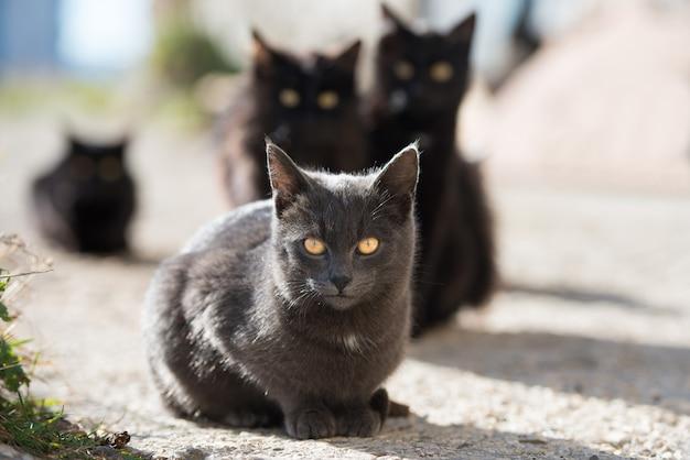 Gruppo di gatti seduti e guardando la telecamera