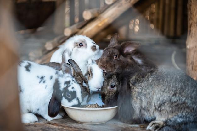 Gruppo di conigli carini mangiare cibo.