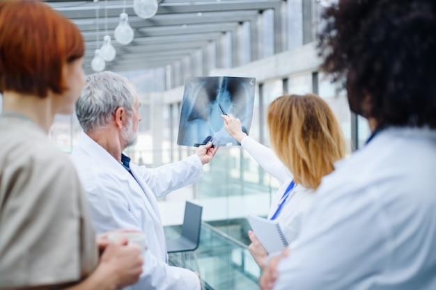 Un gruppo di medici che parlano del virus corona in conferenza, vista posteriore.