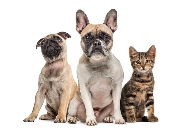 Gruppo di cani e gatto seduto