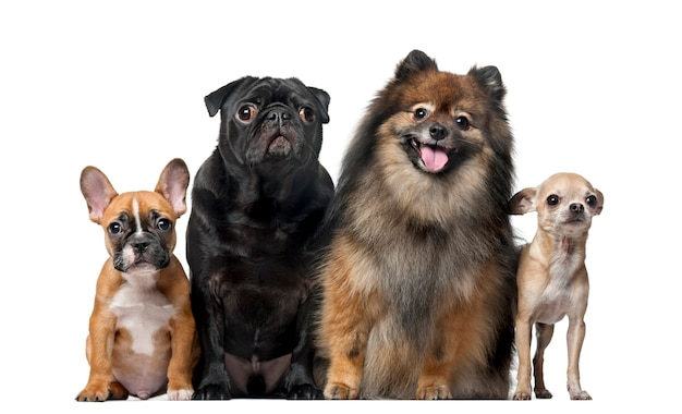 Gruppo di cani davanti a un muro bianco