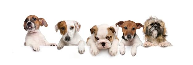 Gruppo di cani, animali domestici, che si appoggia su una tavola vuota bianca